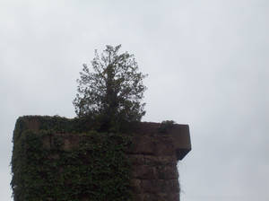 Tree in the Stone SKY