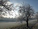Winter wonderland by ugnip