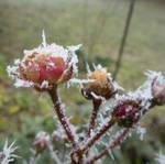 frozen by ugnip