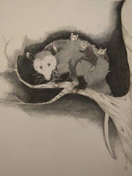 Opossums by Mechasupial
