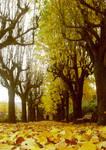 Autumn by NyankoS