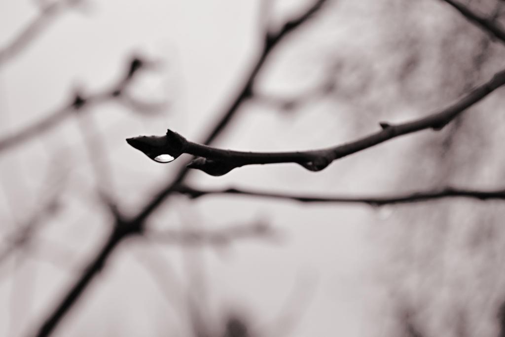 Nature8+ by TeeRez
