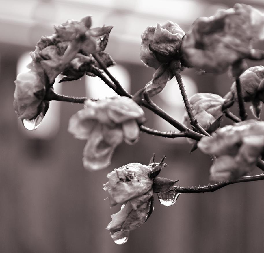 Nature1+ by TeeRez