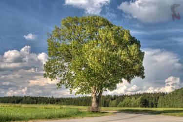 A tree by Nethradorus