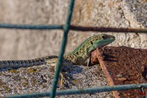 A prisoner behind the fence.