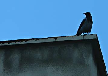 Crow + Blue Sky by Labyr1nth