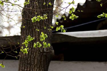Green Leaf by Labyr1nth