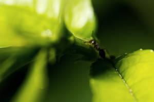 Ant II by Labyr1nth
