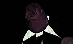 Dark Rose by Labyr1nth
