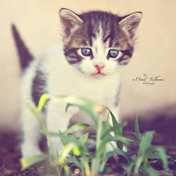 my adorable kitten