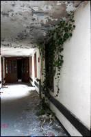 Talgarth Asylum - Ivy by nhf1