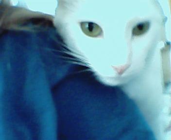 ridia's Profile Picture