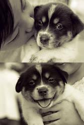 Bashful Puppy Kisses by joebbowers