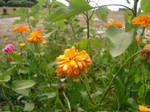Some flowers in Bretagne