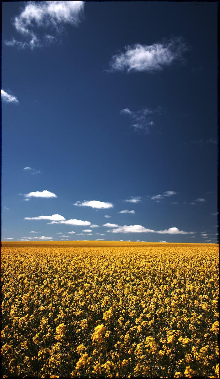 Solar Fields by s9
