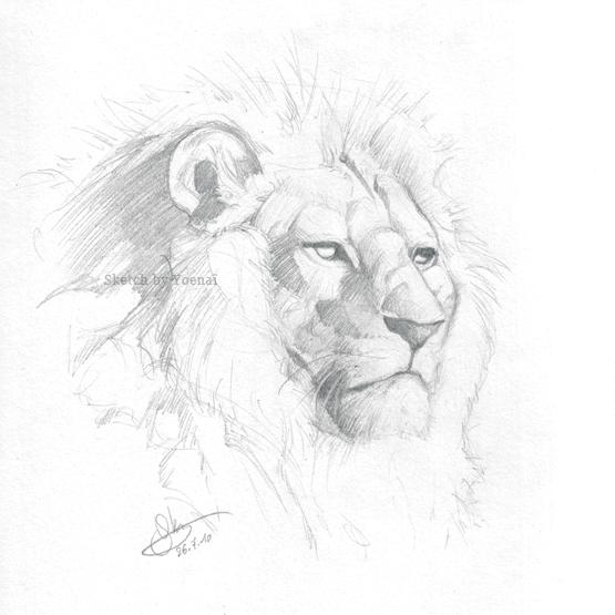lion sketch by yoenai on deviantart. Black Bedroom Furniture Sets. Home Design Ideas