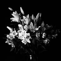 Flower Trial 002 Bw Square by pleabiusminor