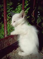 kitty by Fioleeetka