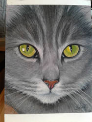 Kitten Pants :) by Binoched