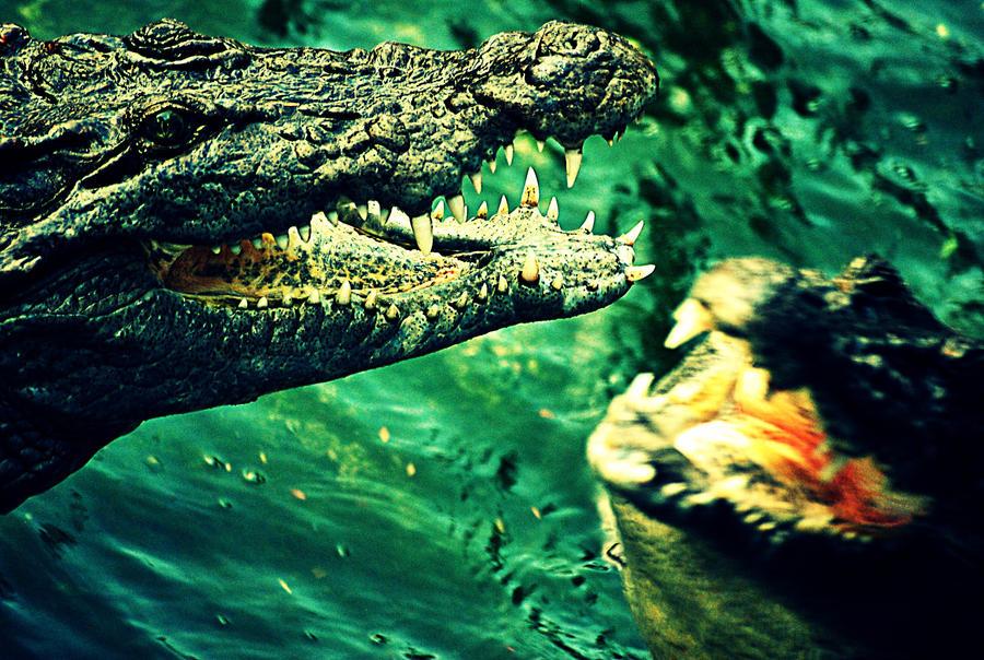 Crocs On Hunt by mariekristel