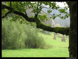 Tree Branch by alexmd