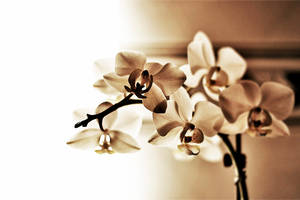 Orchidee2 by xodus7