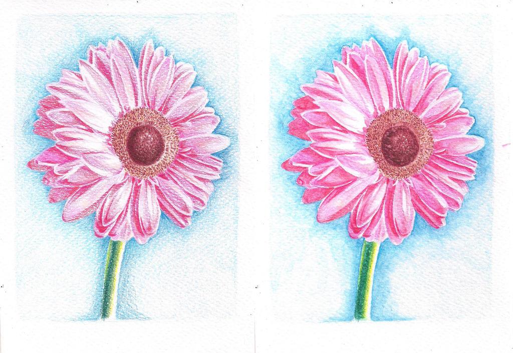Aquarelle pencils' flower by LuLucho1