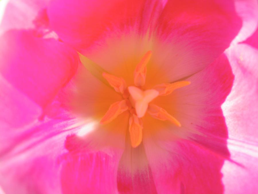 tulip inside by bluediabolo