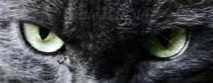 bluediabolo's Profile Picture
