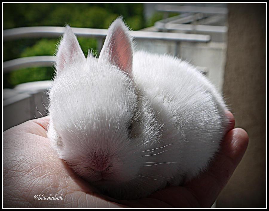 Sleepyhead by bluediabolo
