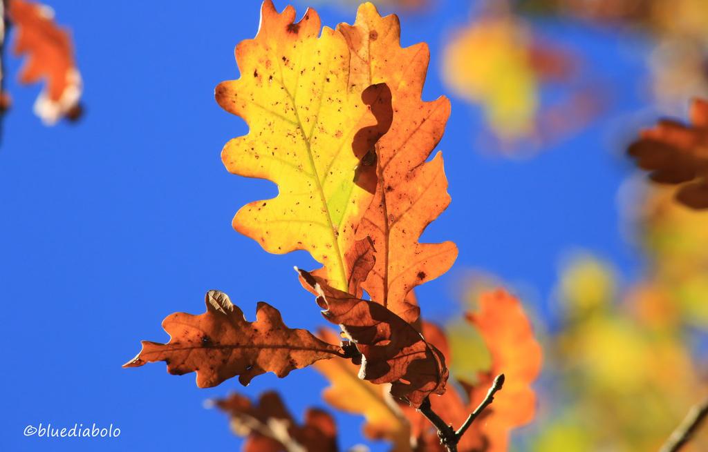 Autumn by bluediabolo