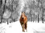 Snow-Pony