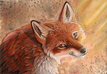 Sunny Fox by dawndelver