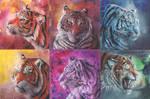 Tigercolours