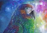 RainbowMacawness