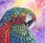 Shamrock Macaw2