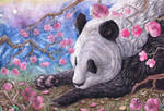 A Lazy Panda