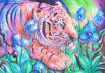 Blue Orchid Tiger