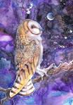 Bran Owl Moon