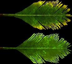 Palm Tree Leaf Png