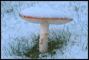 Mr. Mushroom by Stroul