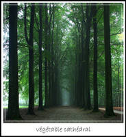 walk in the wood by thescal
