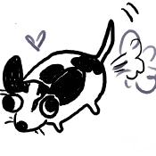 Gogo the Chihuahua by truecake