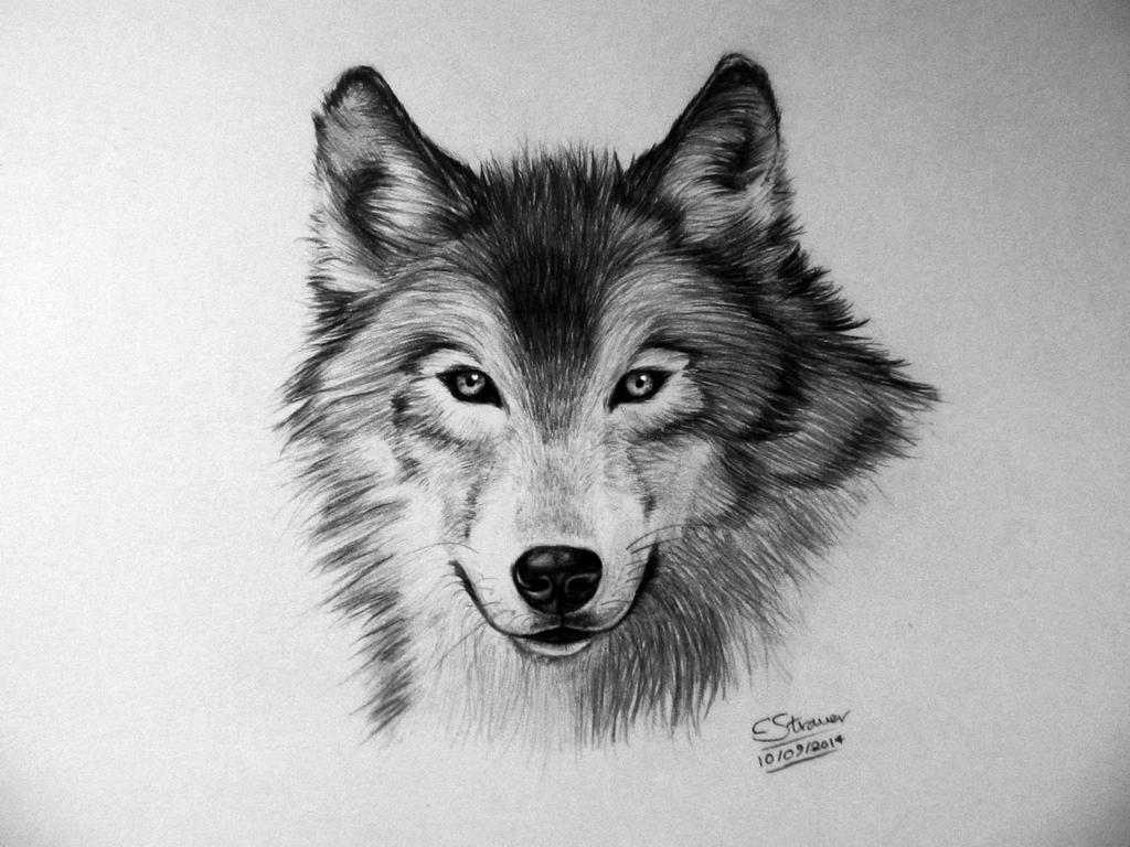 Wolf Drawing Pictures