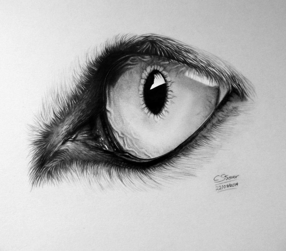 Realistic Wolf Eye Drawing by LethalChris