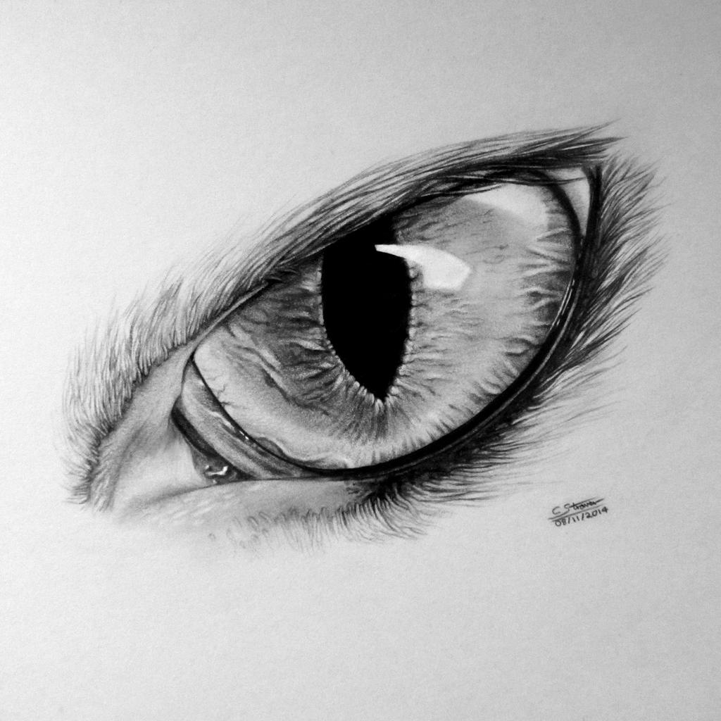 Realistic Cat Eye Drawing by LethalChris on DeviantArt