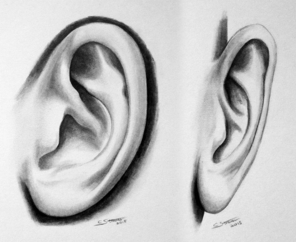 Realistic Ear Study Drawing by LethalChris on DeviantArt