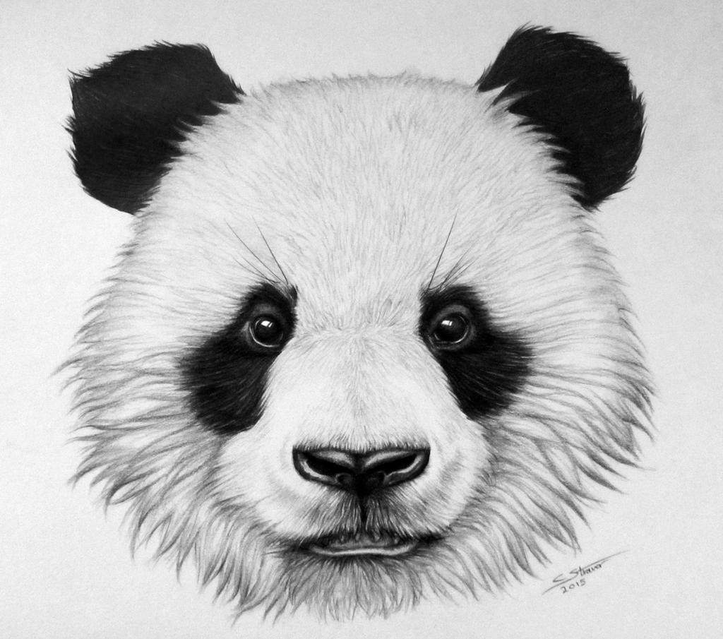 Panda Bear Drawing by LethalChris on DeviantArt - photo#24