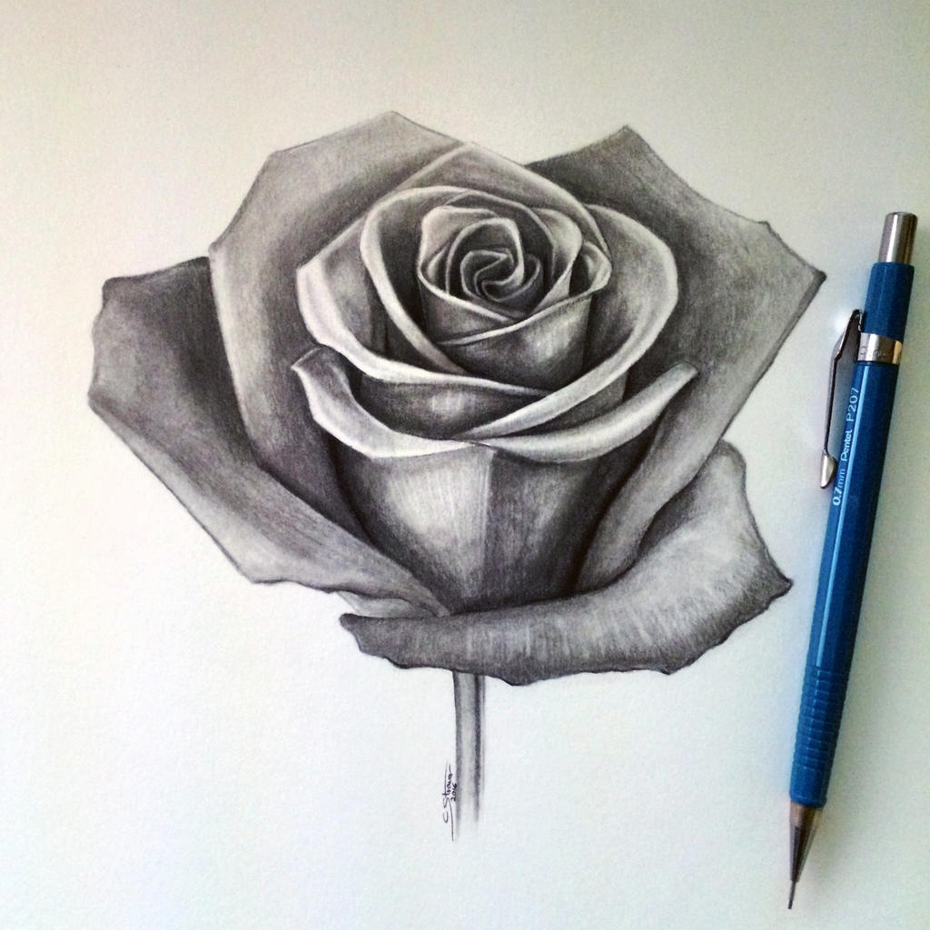 Rose drawing by lethalchris on deviantart for How to draw a black and white rose