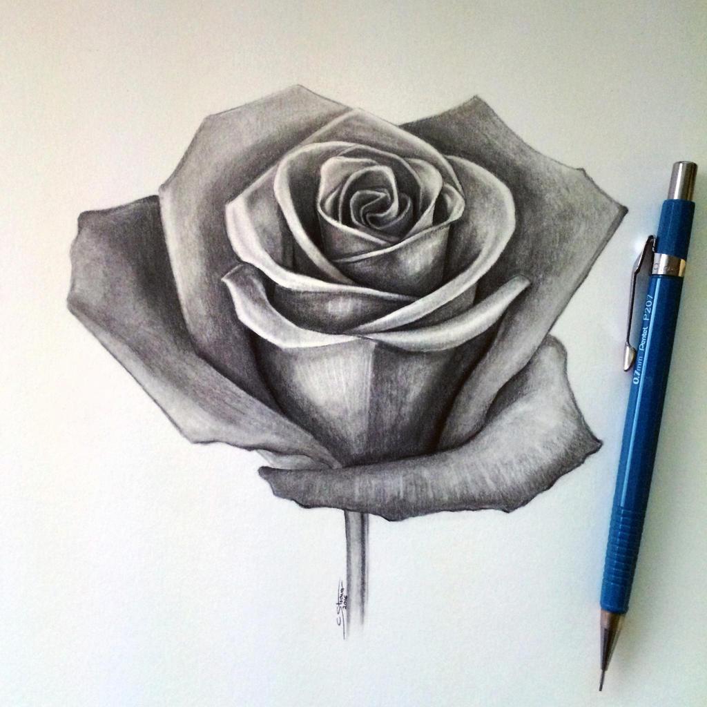Rose Drawing By Lethalchris On Deviantart